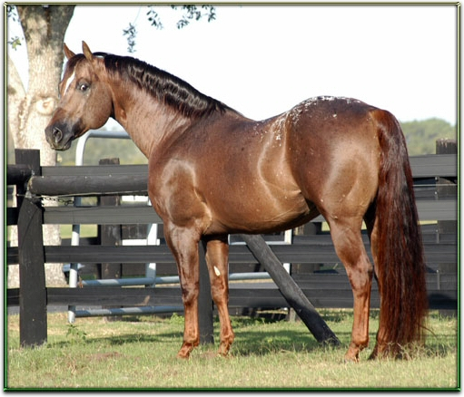 BEAUTIFUL HORSES FOR SALE Hcfrm%20copy